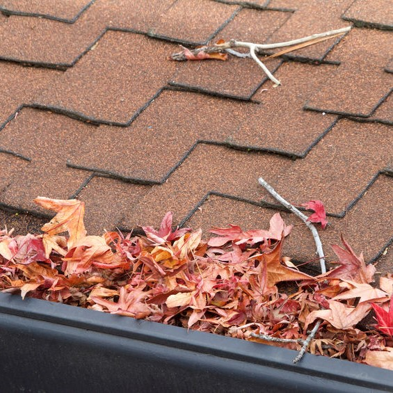 leaves in a gutter system