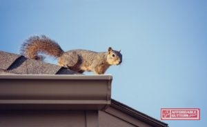 squirrel by gutter